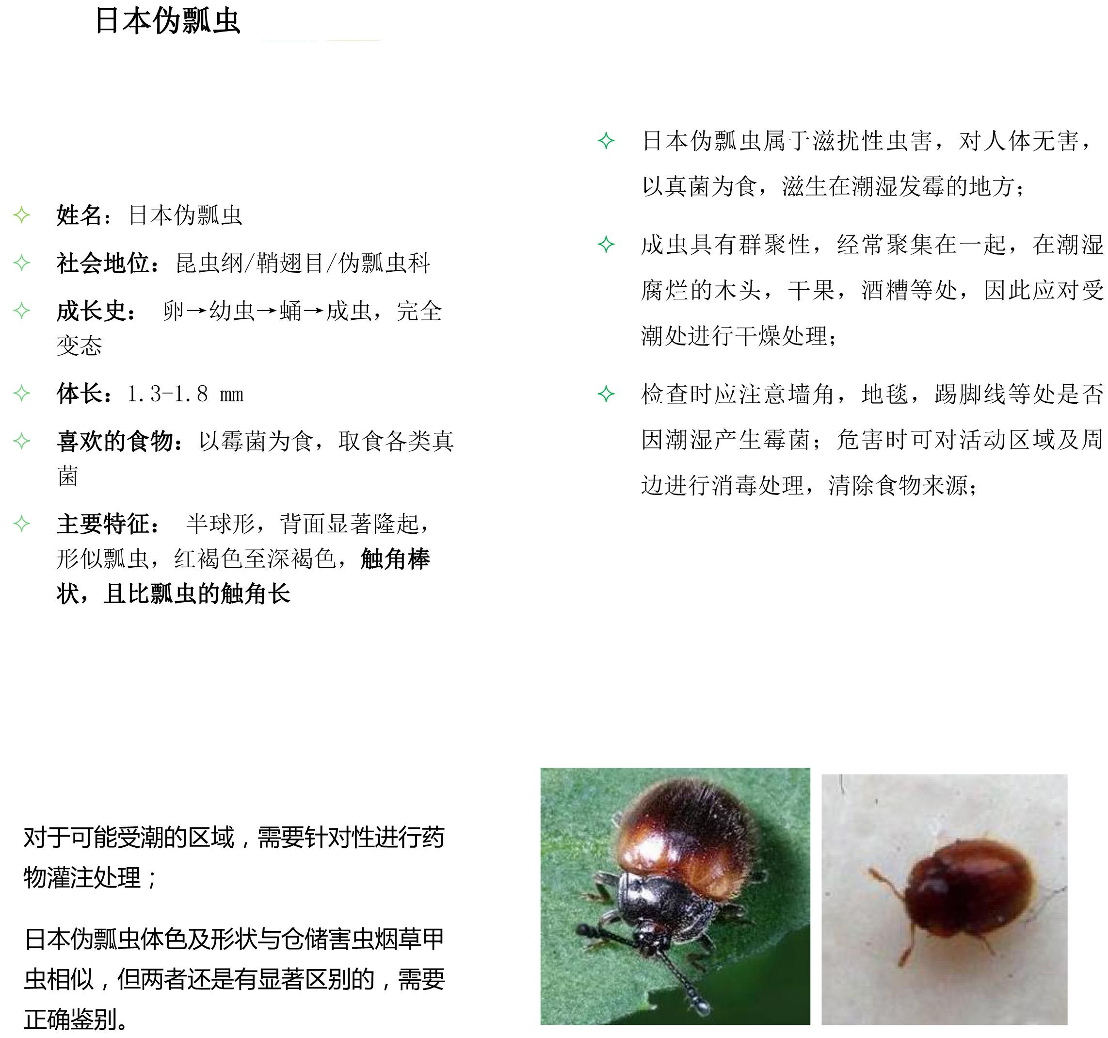 其他害虫-2.jpg